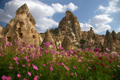 Flowers in Kapadokya. With stone buildings as background Royalty Free Stock Image