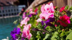 Flowers on Kapellbrücke Royalty Free Stock Image
