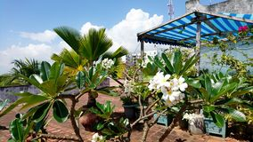 Flowers on the Kenyan beach. Flowers on the roof Kenyan beach Mombasa Kenya Royalty Free Stock Photo