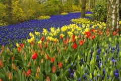 Flowers in Keukenhof, Netherlands Royalty Free Stock Photo