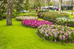 Flowers in Keukenhof, Netherlands Royalty Free Stock Image