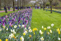 Flowers in Keukenhof, Netherlands Stock Photos