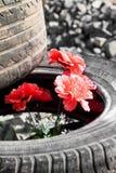 Flowers Kiev Maidan Royalty Free Stock Image