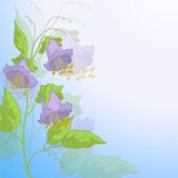 Flowers kobe and blue sky Royalty Free Stock Photo