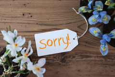 Flowers, Label, Text Sorry Royalty Free Stock Image