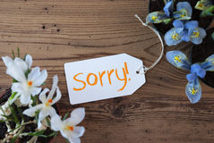 Flowers, Label, Text Sorry Stock Images