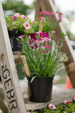 Flowers on a ladder Stock Image