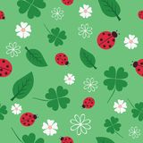 Flowers and ladybirds. Royalty Free Stock Image