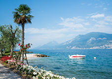 Flowers at Lake Garda Royalty Free Stock Image