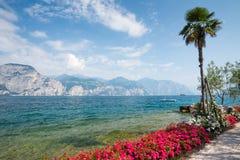 Flowers at Lake Garda Royalty Free Stock Photo