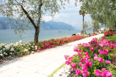 Flowers at Lake Garda Stock Image