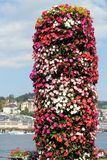 Flowers on Lake Lucerne. Flowers and the town of Lucerne, Switzerland, overlooking the lake Stock Photography