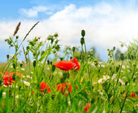 Flowers, landscape. Summer landscape with flowers and herbs royalty free stock photo