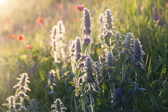 Flowers landscape sunrise Royalty Free Stock Photography