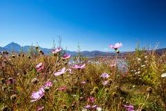 Flowers. Lashihai lake in Yunnan province, China Stock Image