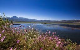 Flowers on the Lashihai lake. Lashihai lake, Yunnan Province, China Royalty Free Stock Images