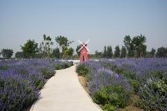 Flowers, lavender, lemon verbena, windmill Stock Image