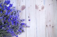 Flowers, Lavender, Top Royalty Free Stock Photo