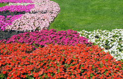 Flowers and lawn Stock Image