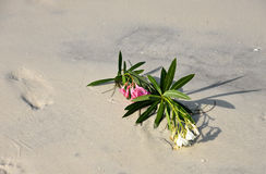 Flowers Laying on the Beach Stock Photos