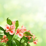 Flowers with leaves on green Stock Photos