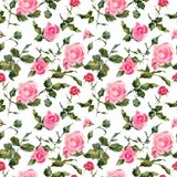 Rose flowers handmade watercolor seamless pattern gentle. Flowers, leaves of handmade seamless pattern wild roses. Briar, watercolor painting for decoration Stock Photography