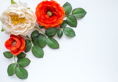 Flowers and leaves. Orange and white flowers and leaves on white background royalty free stock image