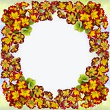 Flowers and leaves of primrose. Decorative composition on watercolor background. royalty free stock photos