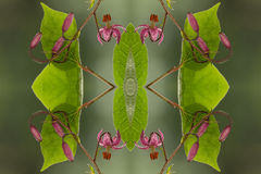 Flowers and leaves  symmetry. Close up of  flowers and leaves in symmetry Stock Photography