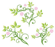 Flowers, leaves, vector set Royalty Free Stock Image