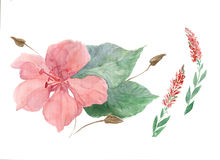 Flowers and leaves.Watercolor. Wallpaper. Royalty Free Stock Photography
