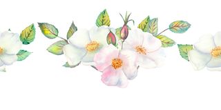 The flowers and leaves of wild rose. Repetition of summer horizontal border. Floral watercolor illustration. Compositions for greeting cards or invitations stock images