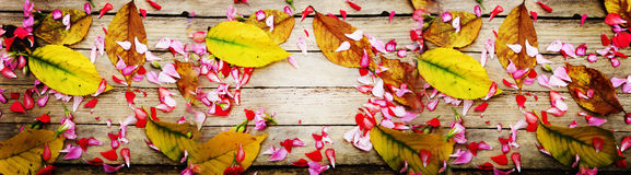 Flowers and leaves on wood texture. Autumnal composition of colorful flowers and yellow leaves Stock Photography