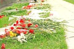 Flowers lie on the ground. Beautyful carnation flowers lie on the ground Royalty Free Stock Photo