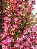 flowers_life 免版税库存图片