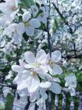 flowers_life 免版税图库摄影