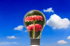 Flowers in the light bulb Royalty Free Stock Photos