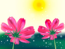 Flowers. Light illuminated  the background from beautiful translucent flowers Stock Image