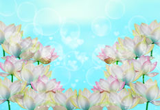 Flowers. Light illuminated  the background from beautiful translucent flowers Stock Photos