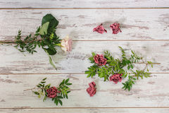 Flowers on a light wooden background. Different varieties of flowers lie on a light wooden background or vintage board. View from above Stock Images