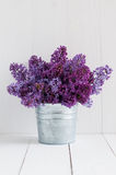 Flowers of lilac Stock Image