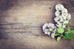 Flowers of lilac lie on the woods Stock Photo