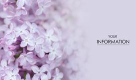 Flowers lilac macro photo garden blurred royalty free stock photos