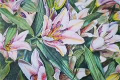 Flowers lilies with colored pencils. Flowers lilies.Illustration drawn with colored pencils Royalty Free Stock Photography