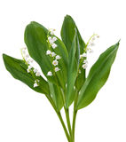 Flowers. lilies of the valley isolated over white Royalty Free Stock Photography