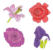 Flowers. Lily and iris, aster rose vector illustration