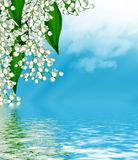 Flowers lily of the valley Stock Images