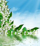 Flowers lily of the valley Stock Photography
