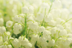 Flowers of a lily of the valley. Gentle spring background Stock Photography