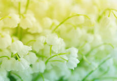Flowers of a lily of the valley. Gentle spring background Royalty Free Stock Photos